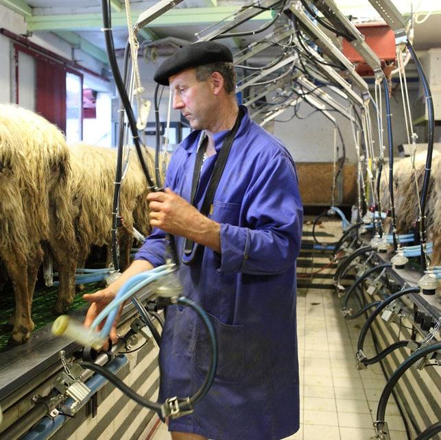 fabrication fromage au coeur du pays basque